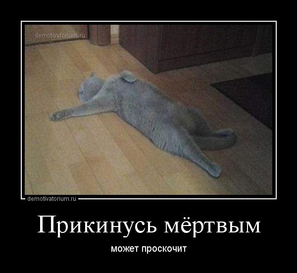 http://demotivatorium.ru/sstorage/3/2013/06/19110902786068/1906131109027516.jpg