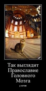 демотиватор Так выглядит Православие Головного Мозга у котов - 2013-7-29