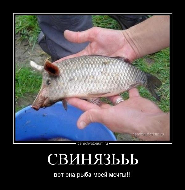 Ленинград Рыба моей мечты слушать онлайн и скачать