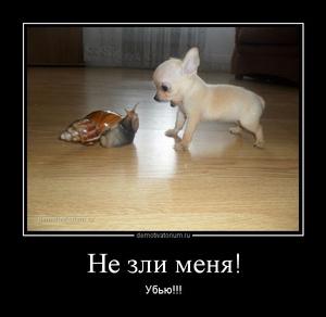 Демотиватор Не зли меня! Убью!!!