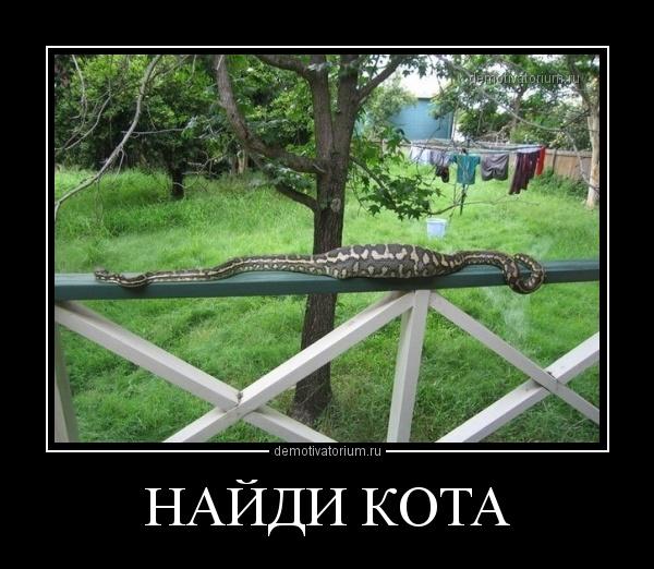demotivatorium_ru_najdi_kota_36517.jpg