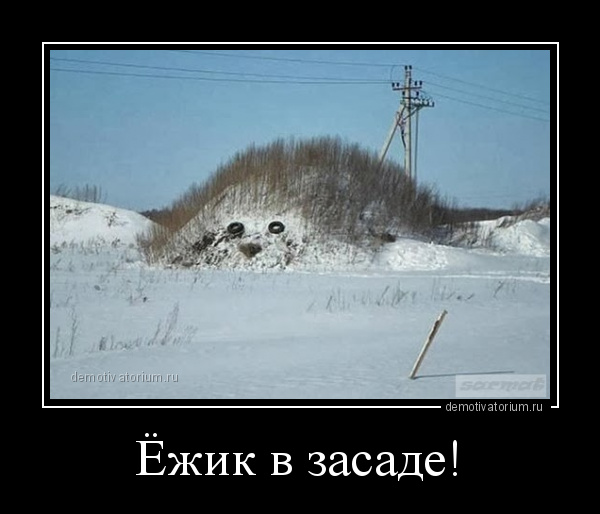 демотиватор Ёжик в засаде!  - 2014-1-07
