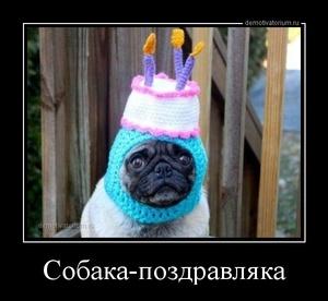 демотиватор Собака-поздравляка