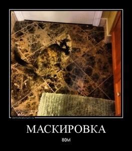 Демотиватор МАСКИРОВКА 80lvl