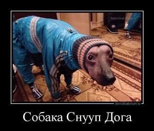 демотиватор Собака Снууп Дога