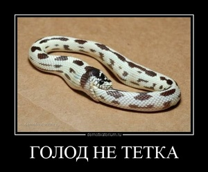 демотиватор ГОЛОД НЕ ТЕТКА  - 2014-1-27