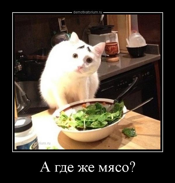 http://demotivatorium.ru/sstorage/3/2014/03/12221445464243/demotivatorium_ru_a_gde_je_mjaso_42523.jpg