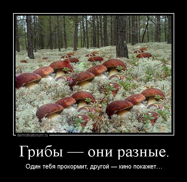demotivatorium_ru_gribi__oni_raznie_4305