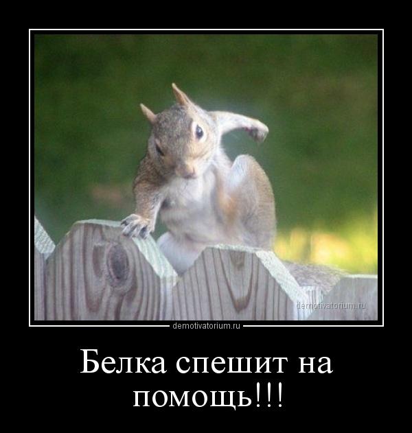 demotivatorium_ru_belka_speshit_na_pomos