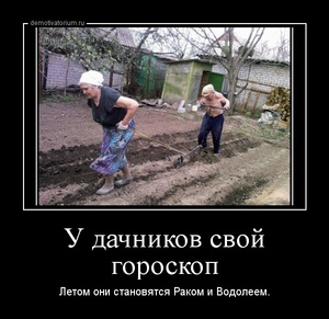 картинки про огород смешные
