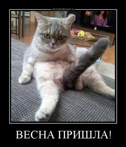 демотиватор ВЕСНА ПРИШЛА!