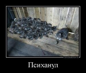 демотиватор Психанул  - 2014-4-30