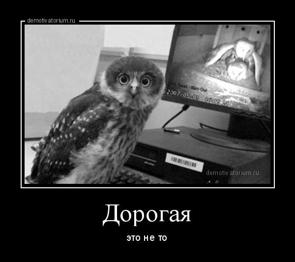 демотиватор Дорогая это не то - 2014-5-02