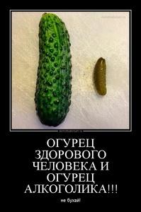 Демотиватор ОГУРЕЦ ЗДОРОВОГО ЧЕЛОВЕКА И ОГУРЕЦ АЛКОГОЛИКА!!! не бухай!