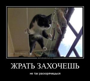 https://demotivatorium.ru/sstorage/3/2014/06/16134208408446/tmb_demotivatorium_ru_jrat__zahochesh__50131.jpg