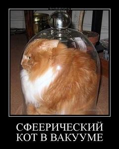 Демотиватор СФЕЕРИЧЕСКИЙ КОТ В ВАКУУМЕ
