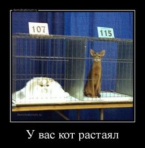 демотиватор У вас кот растаял