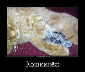 демотиватор Кошкинёж