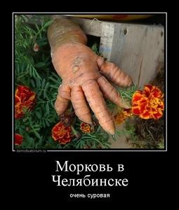Демотиватор Морковь в Челябинске очень суровая