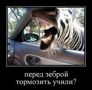 демотиватор с зеброй весьма символично