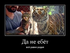 демотиватор Да не ебёт всё равно родня - 2014-8-29