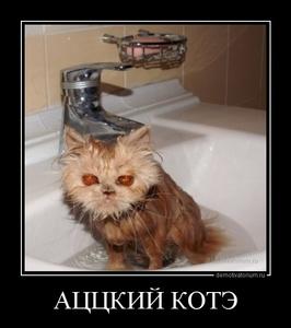 Демотиватор АЦЦКИЙ КОТЭ