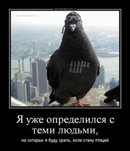 демотиватор Я уже определился с теми людьми, на которых я буду срать, если стану птицей