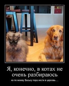 Демотиватор Я, конечно, в котах не очень разбираюсь но по моему Ваську пора нести в церковь....