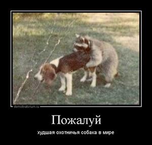 демотиватор Пожалуй  худшая охотничья собака в мире