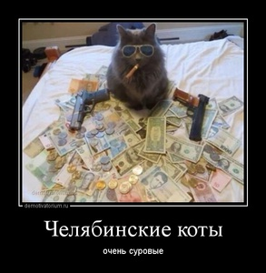 Демотиватор Челябинские коты очень суровые