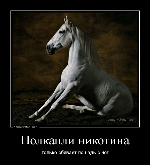 Демотиваторы о лошади