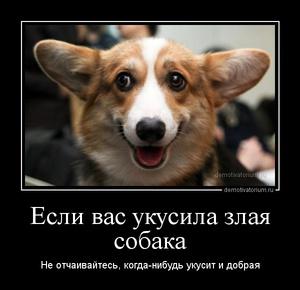 Демотиватор Если вас укусила злая собака Не отчаивайтесь, когда-нибудь укусит и добрая