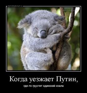 демотиватор Когда уезжает Путин, где-то грустит одинокий коала