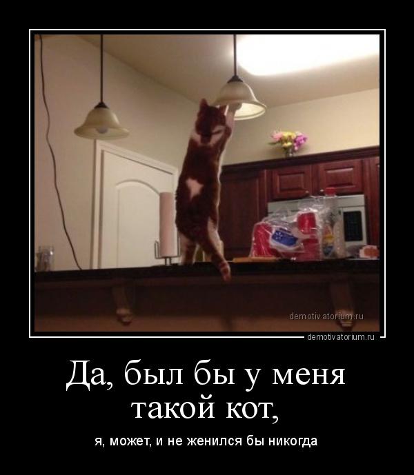 демотиватор Да, был бы у меня такой кот, я, может, и не женился бы никогда - 2015-2-10