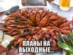 Демотиватор  ПЛАНЫ НА ВЫХОДНЫЕ...