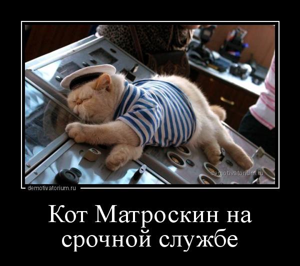 демотиватор Кот Матроскин на срочной службе  - 2018-5-06