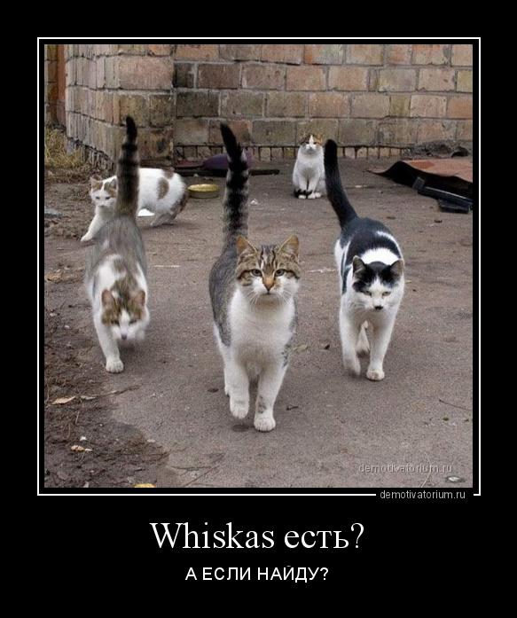 демотиватор Whiskas есть? А ЕСЛИ НАЙДУ? - 2019-3-13