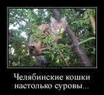 Демотиватор Челябинские кошки настолько суровы...