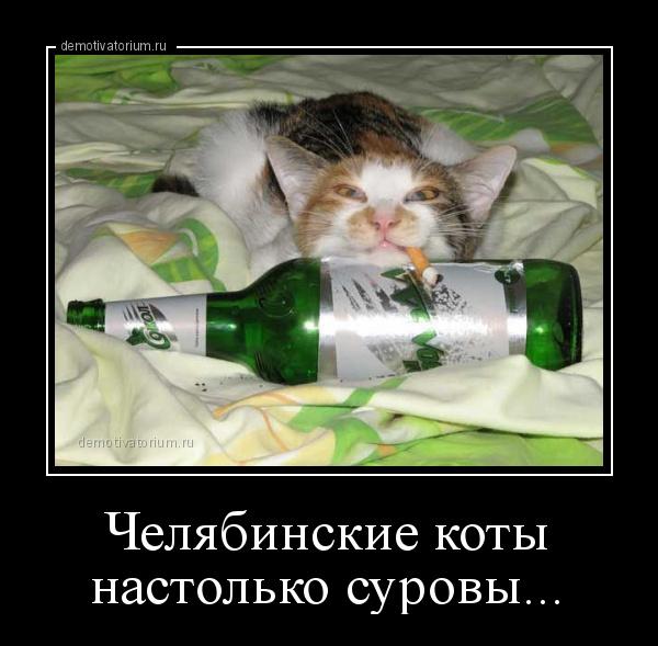 демотиватор Челябинские коты настолько суровы...  - 2020-1-22