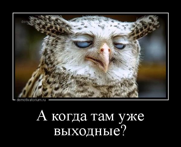Демотиваторы совы (47 фото)