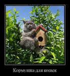 Демотиватор Кормушка для кошек  - 2020-9-01