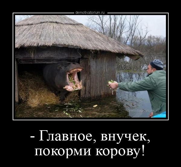 демотиватор - Главное, внучек, покорми корову!  - 2021-6-04